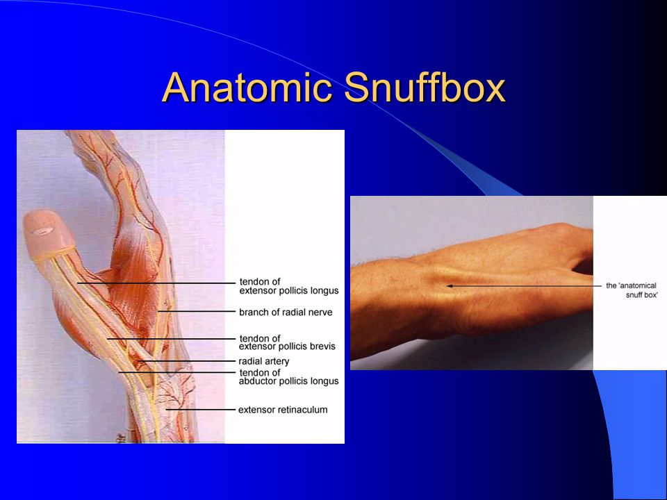 Anatomic Snuffbox