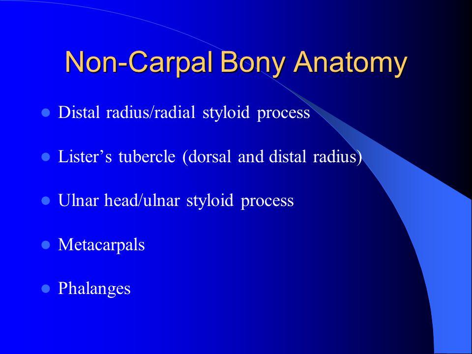 Non-Carpal Bony Anatomy