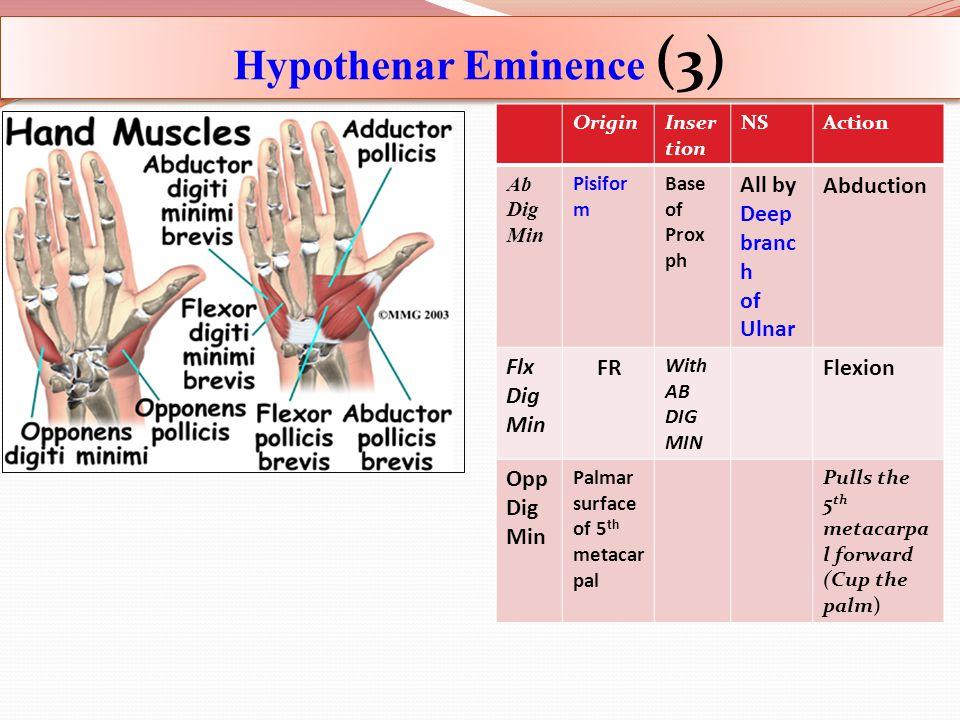 Hypothenar Eminence (3)