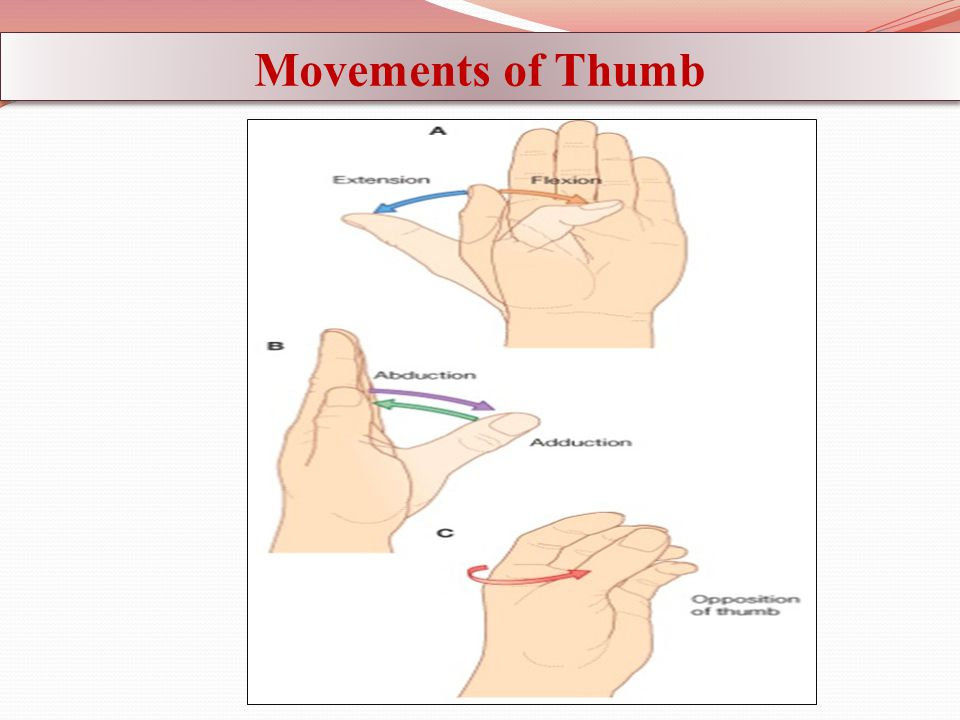 Movements of Thumb