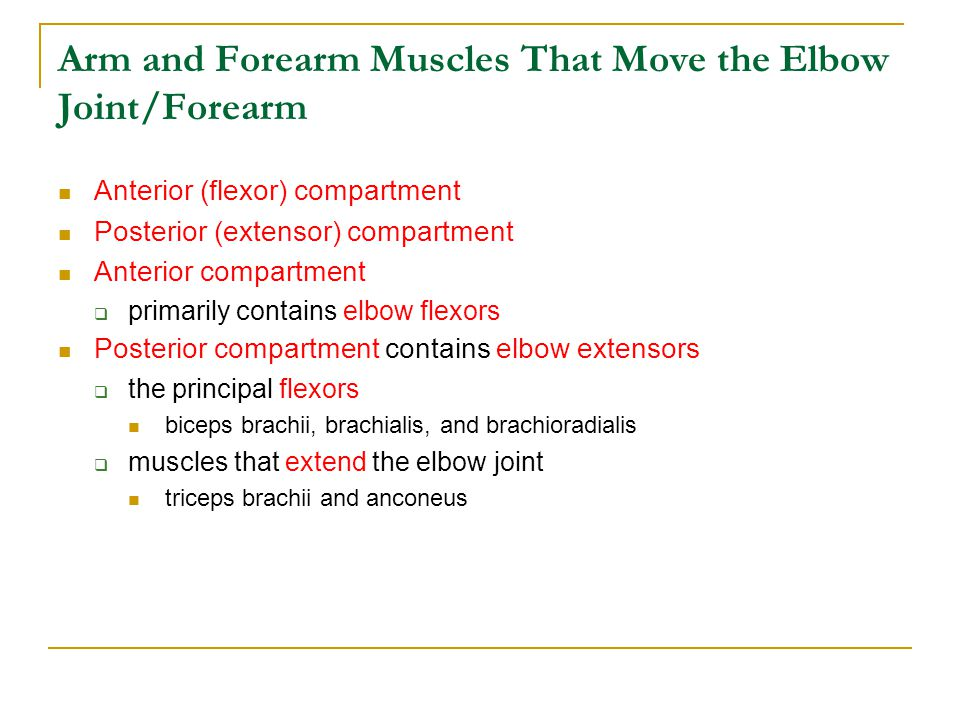 Arm and Forearm Muscles That Move the Elbow Joint/Forearm
