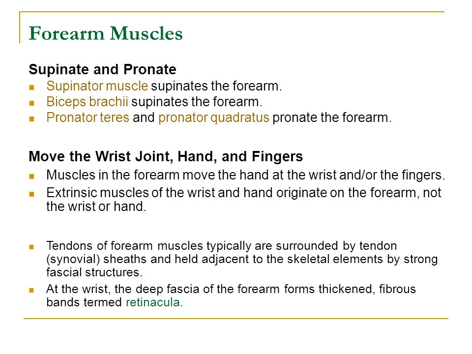 Forearm Muscles Supinate and Pronate