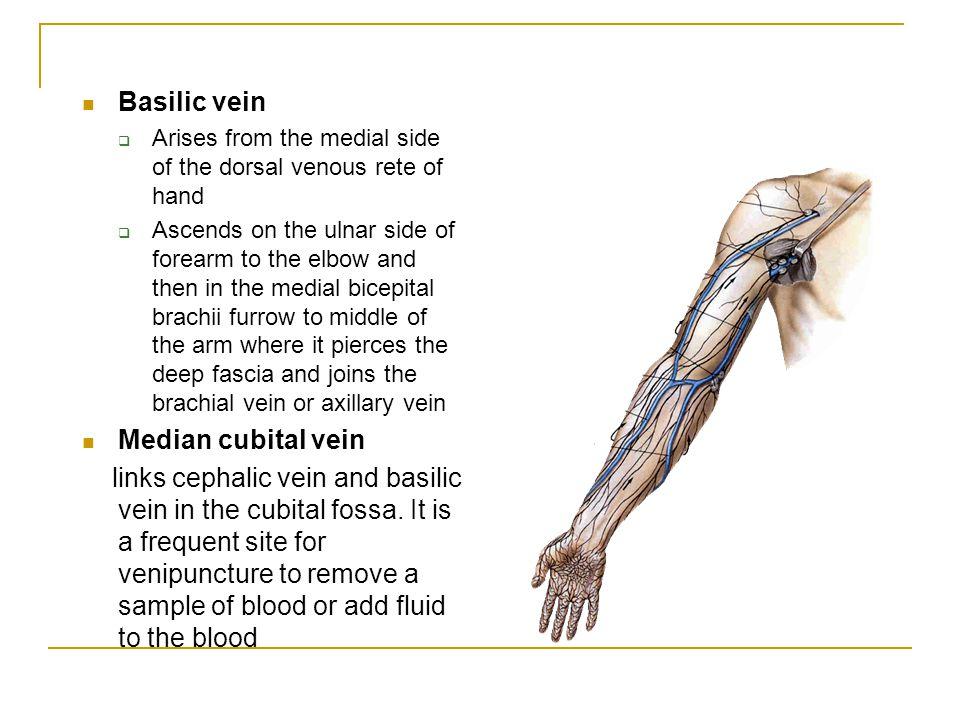 the upper limb. - ppt download, Cephalic Vein