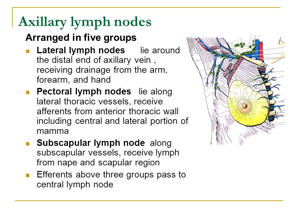 Axillary lymph nodes Arranged in five groups