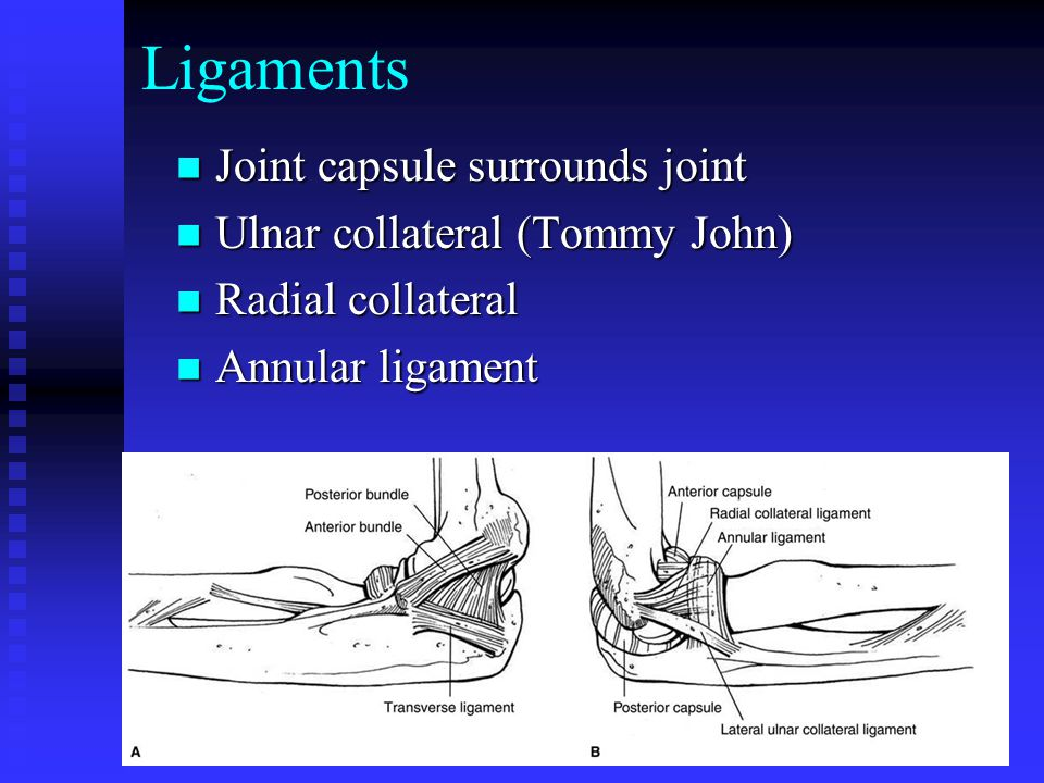 Ligaments Joint capsule surrounds joint Ulnar collateral (Tommy John)