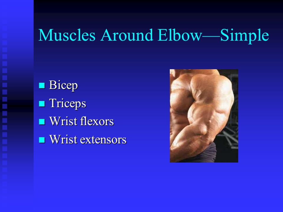 Muscles Around Elbow—Simple