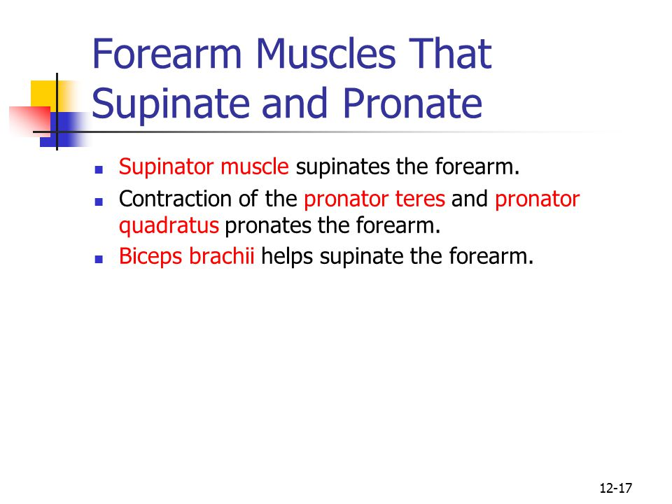 Forearm Muscles That Supinate and Pronate