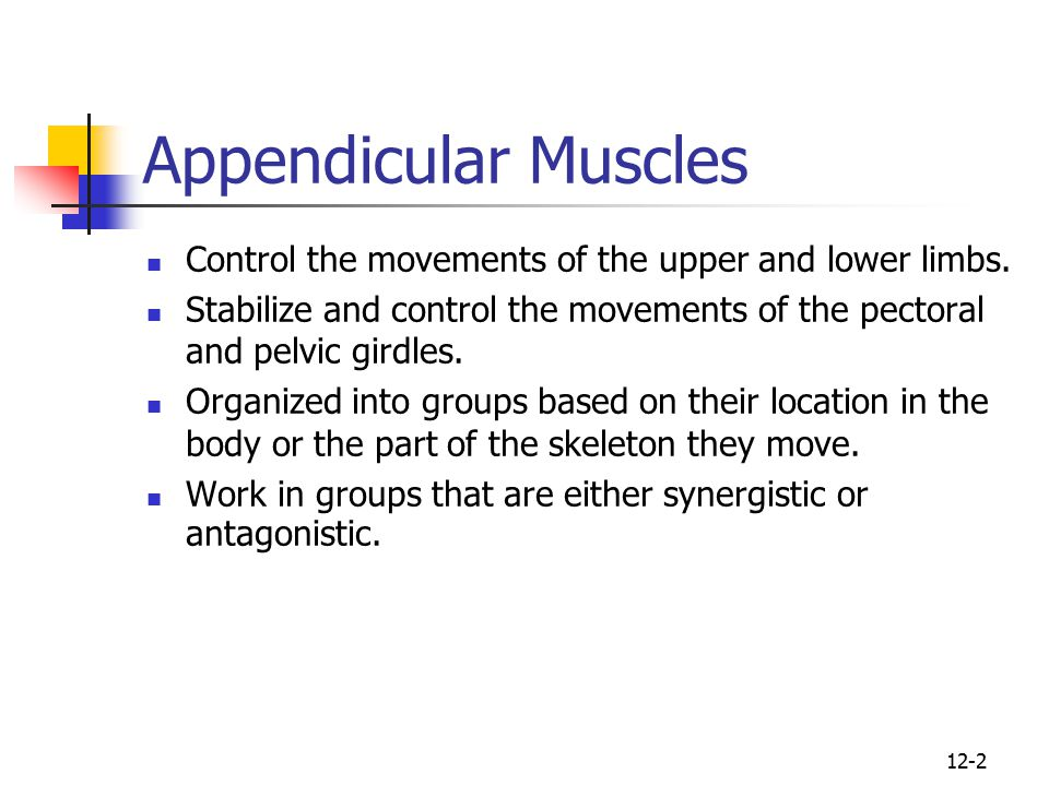 human anatomy, first edition mckinley & o'loughlin - ppt video, Muscles