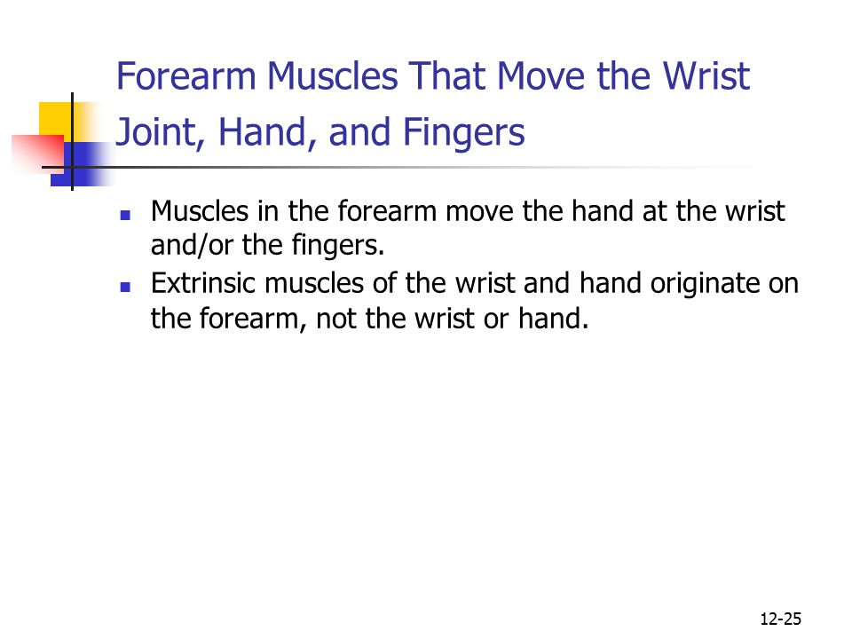 Forearm Muscles That Move the Wrist Joint, Hand, and Fingers