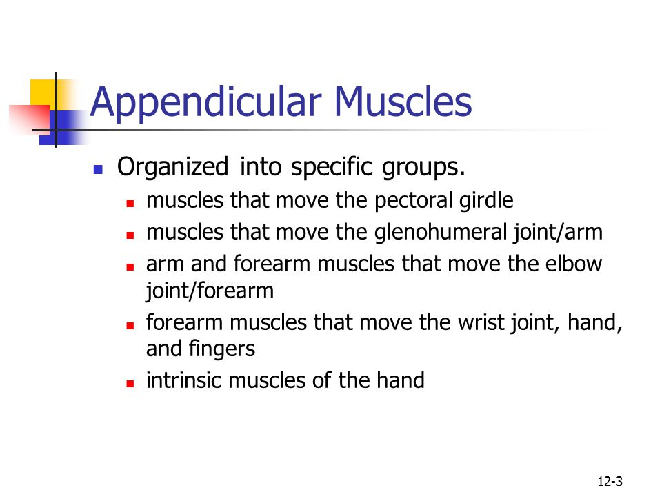Appendicular Muscles Organized into specific groups.