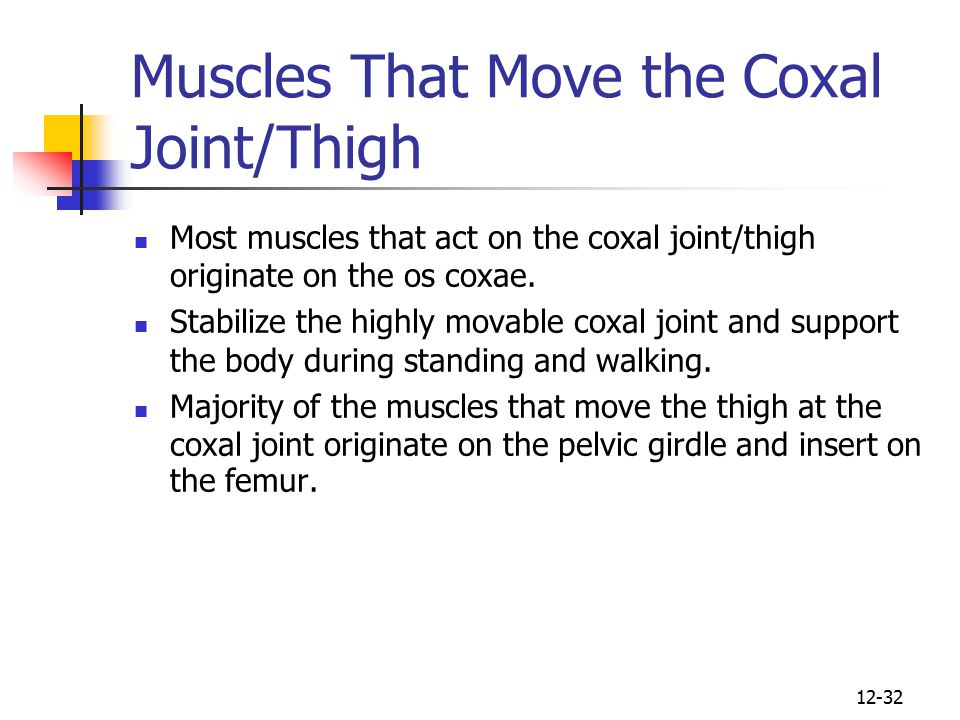 Muscles That Move the Coxal Joint/Thigh