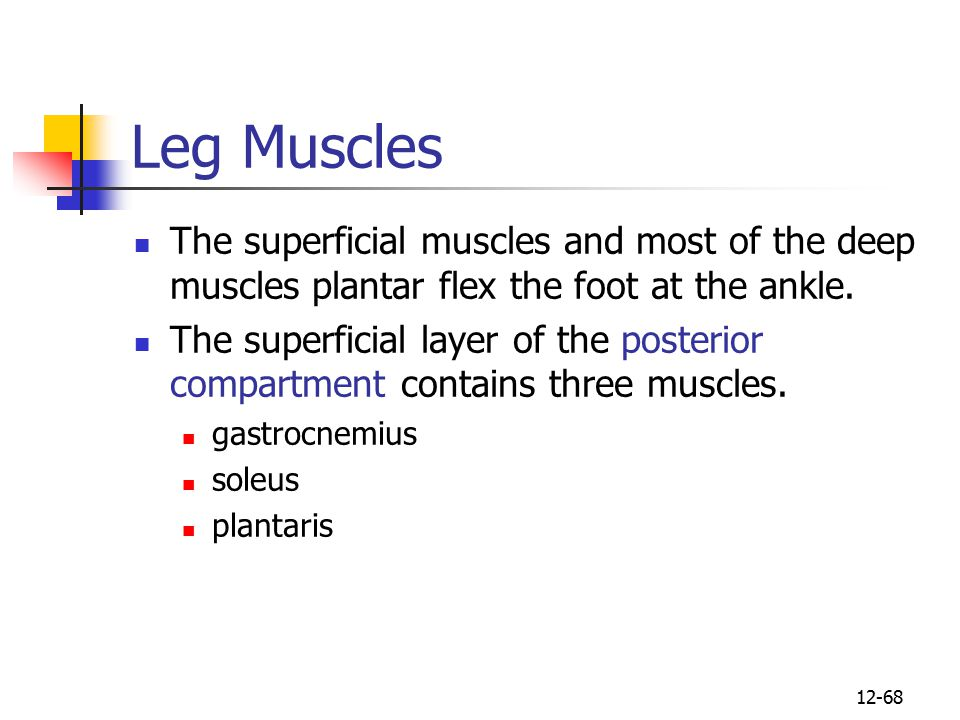 Leg Muscles The superficial muscles and most of the deep muscles plantar flex the foot at the ankle.