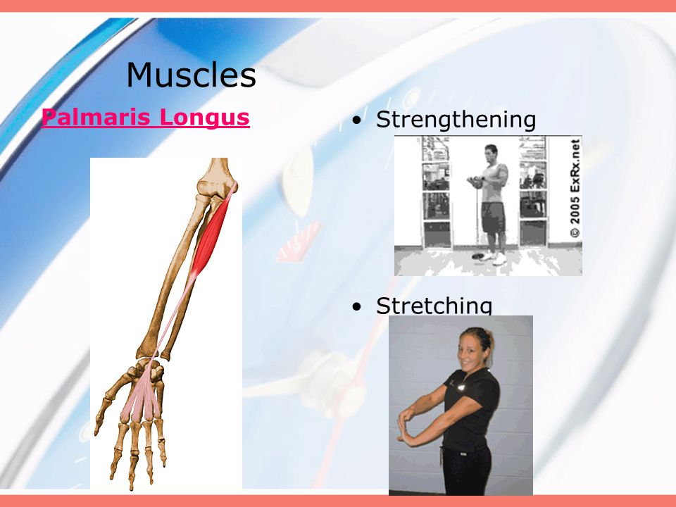 Muscles Palmaris Longus Strengthening Stretching
