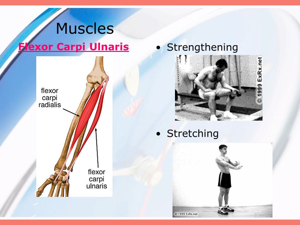 Muscles Flexor Carpi Ulnaris Strengthening Stretching