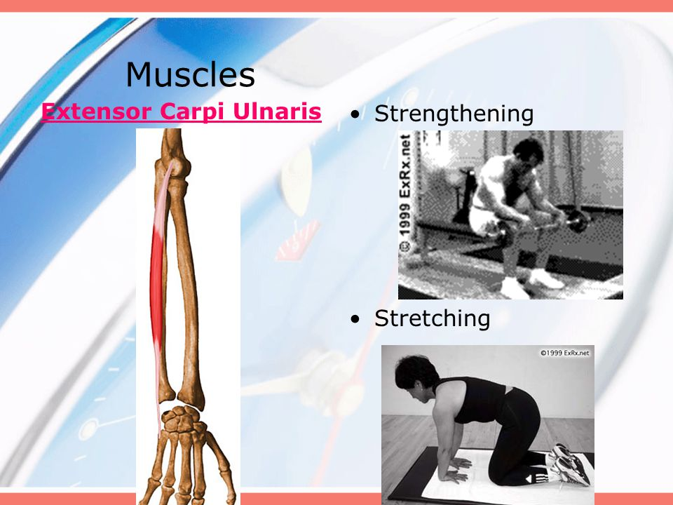 Muscles Extensor Carpi Ulnaris Strengthening Stretching
