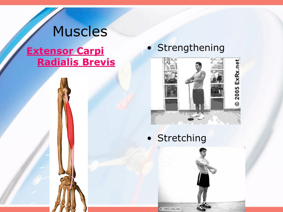 Muscles Strengthening Stretching Extensor Carpi Radialis Brevis