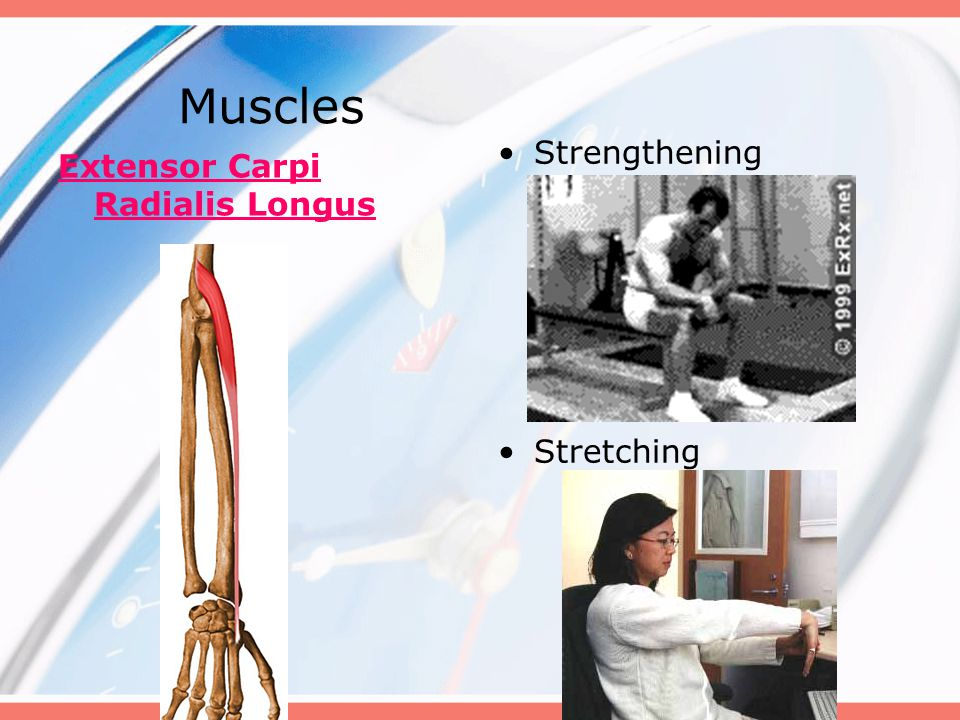 Muscles Strengthening Stretching Extensor Carpi Radialis Longus