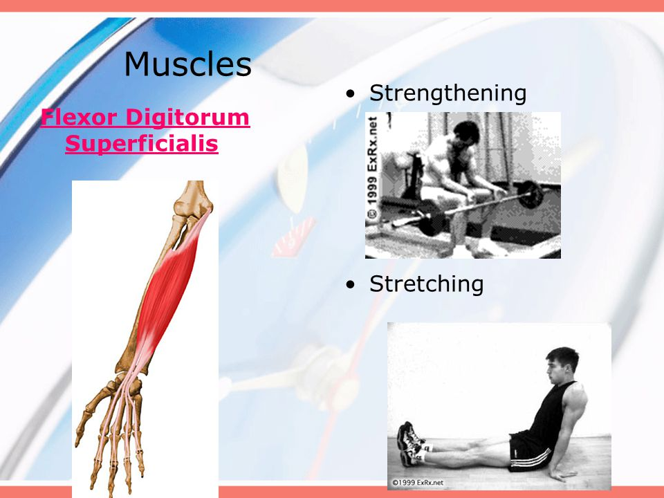 Muscles Strengthening Stretching Flexor Digitorum Superficialis
