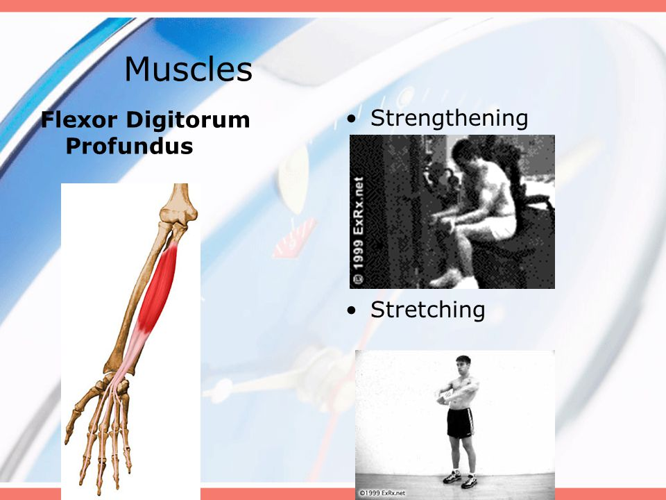 Muscles Flexor Digitorum Profundus Strengthening Stretching