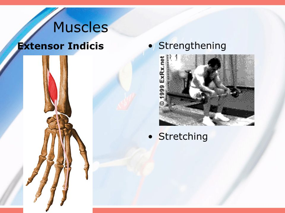 Muscles Extensor Indicis Strengthening Stretching