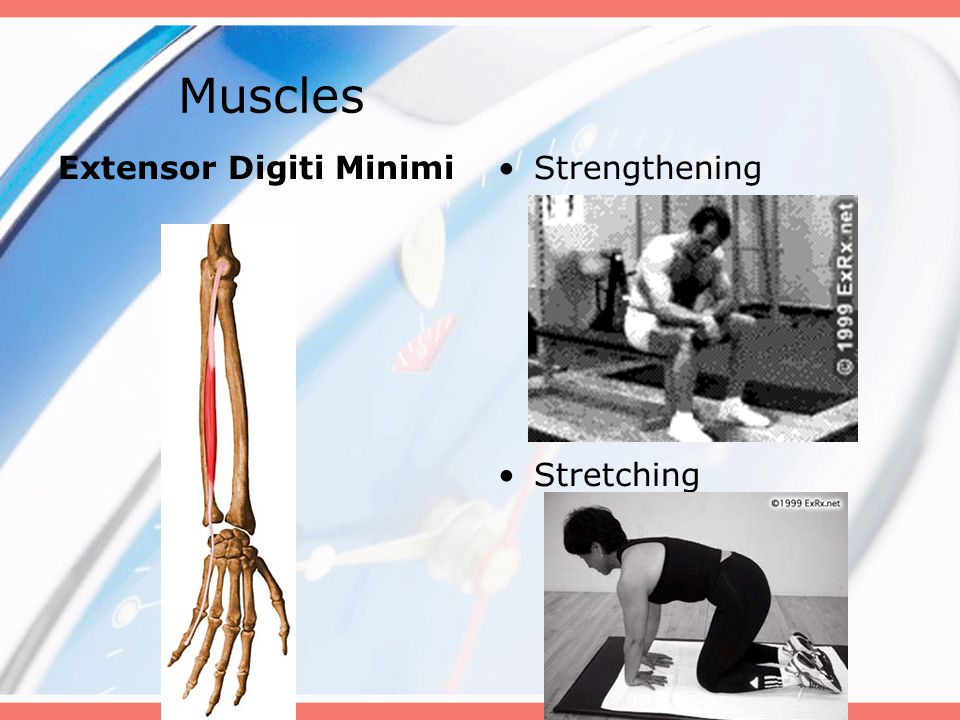 Muscles Extensor Digiti Minimi Strengthening Stretching