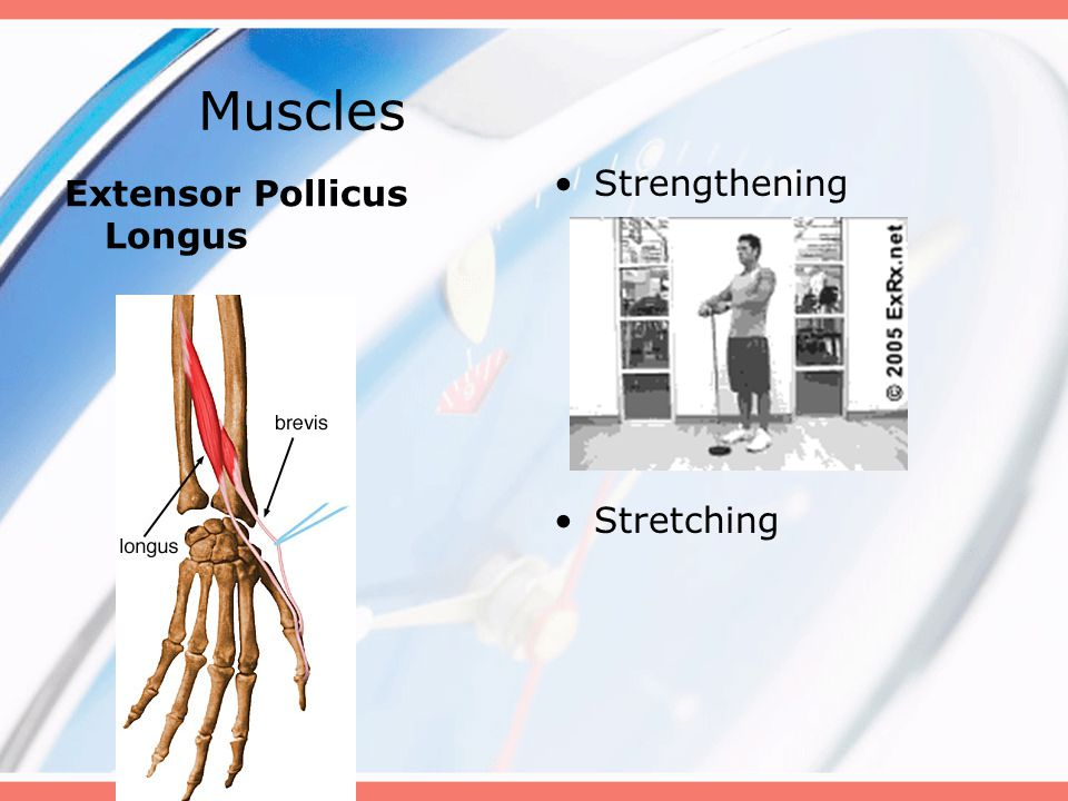 Muscles Strengthening Stretching Extensor Pollicus Longus