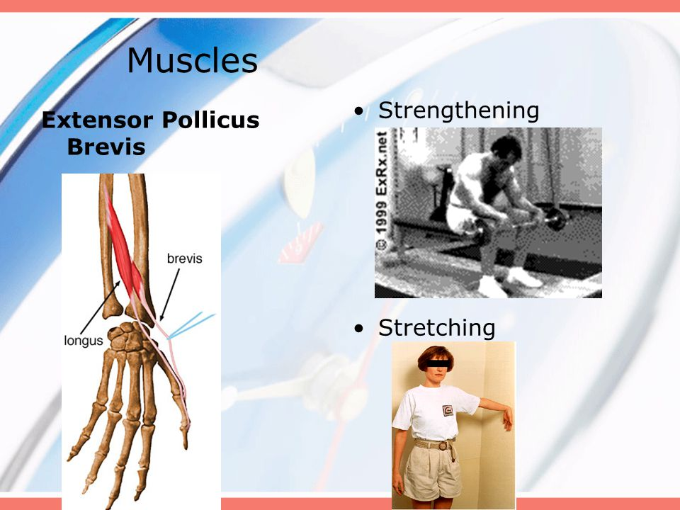 Muscles Strengthening Stretching Extensor Pollicus Brevis