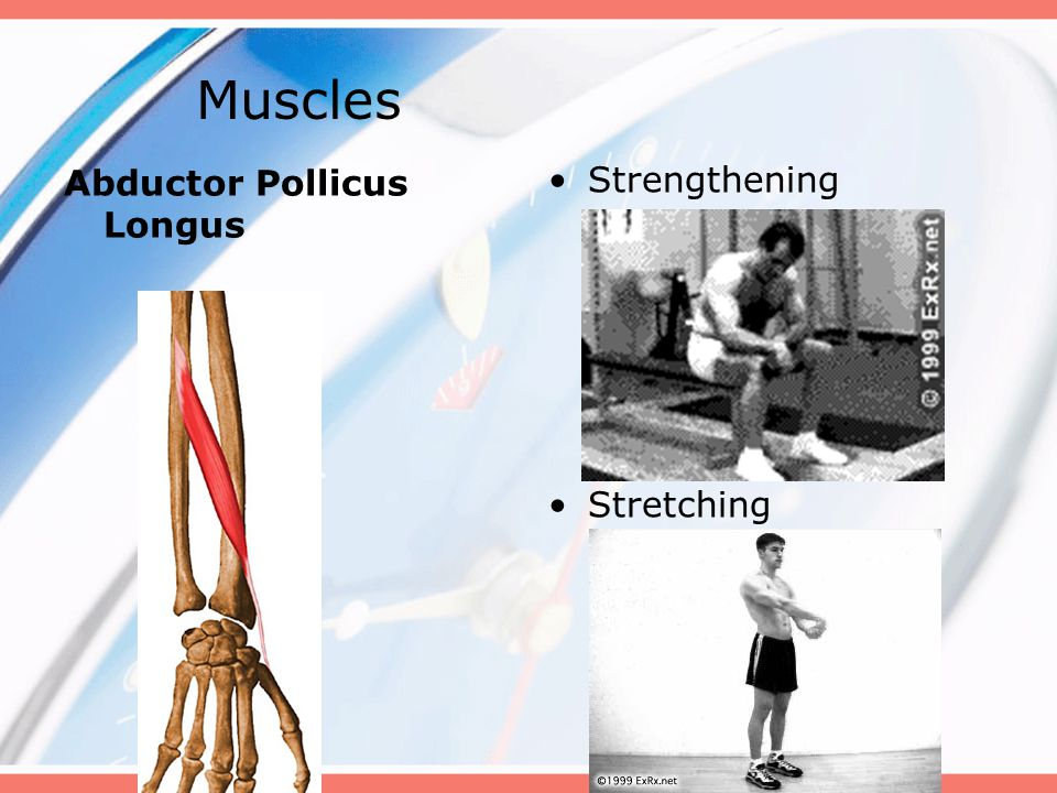 Muscles Abductor Pollicus Longus Strengthening Stretching