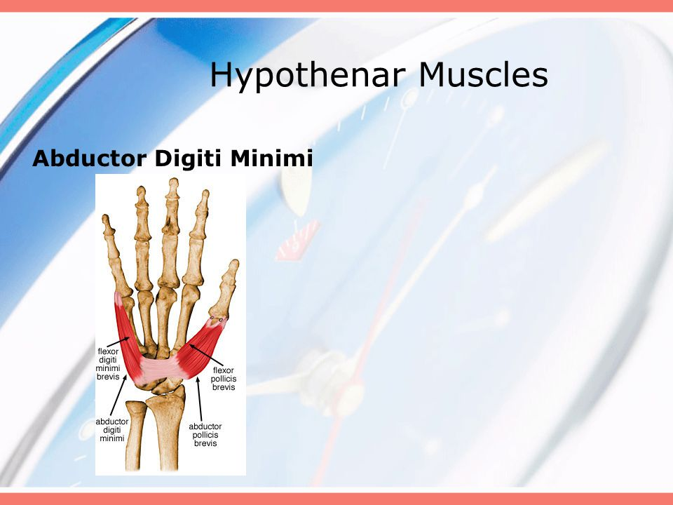Hypothenar Muscles Abductor Digiti Minimi