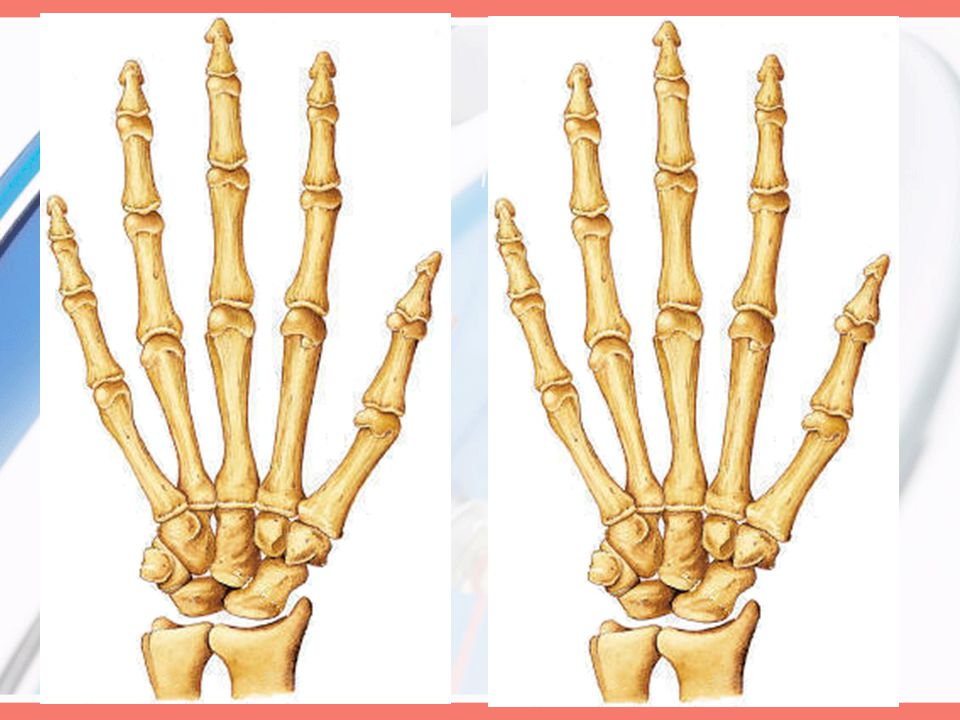Joints Carpometacarpal of the thumb: (seller)