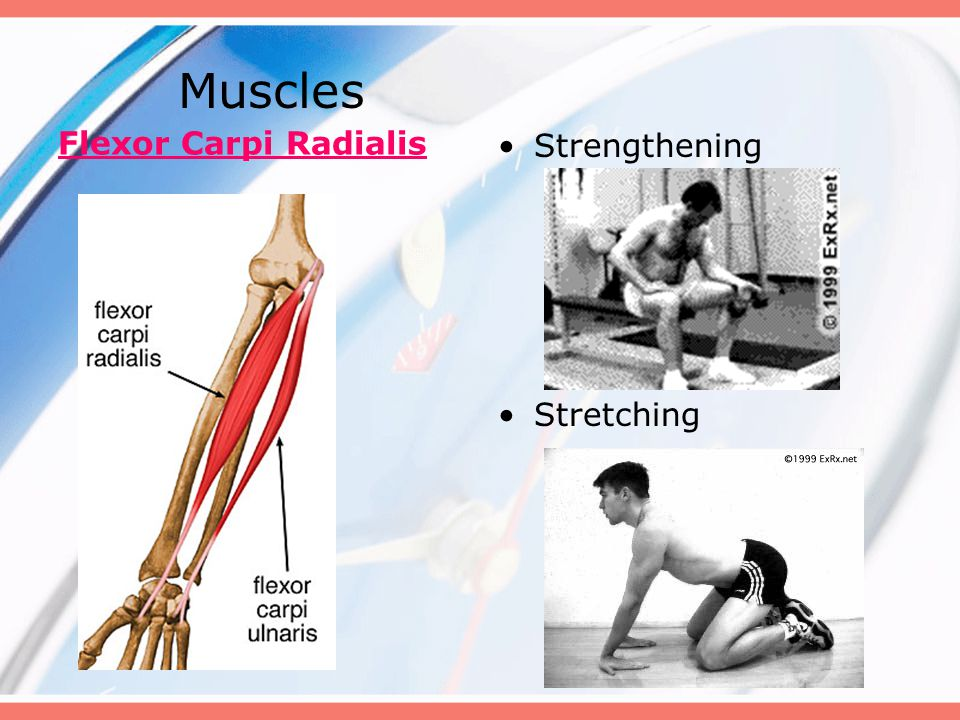 Muscles Flexor Carpi Radialis Strengthening Stretching