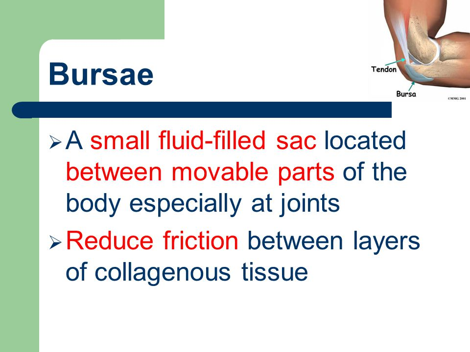 Bursae A small fluid-filled sac located between movable parts of the body especially at joints.