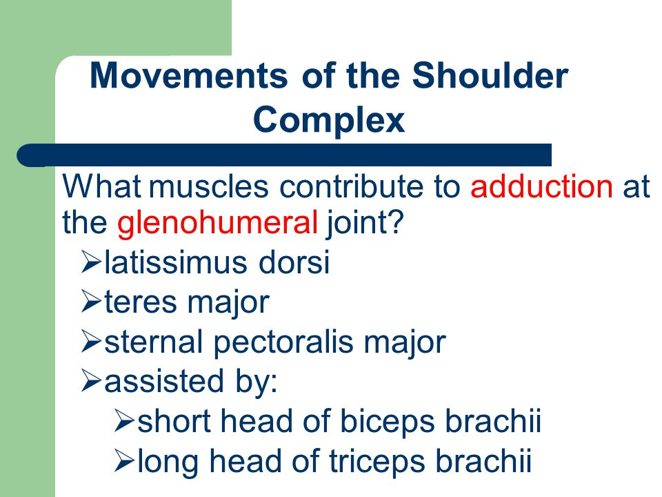 Movements of the Shoulder Complex