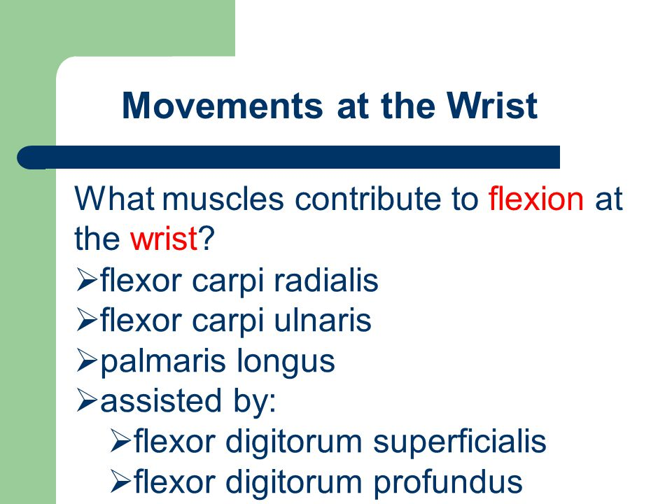 Movements at the Wrist What muscles contribute to flexion at the wrist flexor carpi radialis. flexor carpi ulnaris.