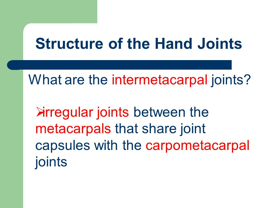 Structure of the Hand Joints
