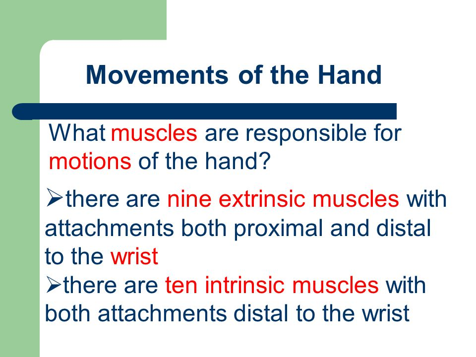 Movements of the Hand What muscles are responsible for motions of the hand