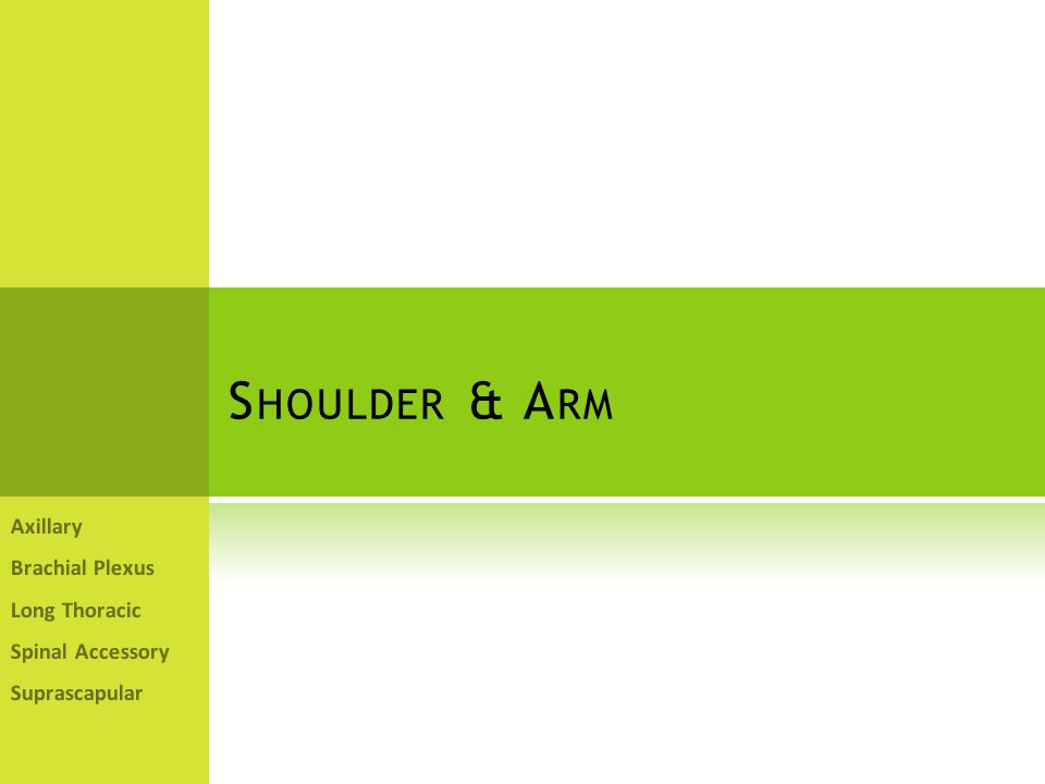Shoulder & Arm Axillary Brachial Plexus Long Thoracic Spinal Accessory