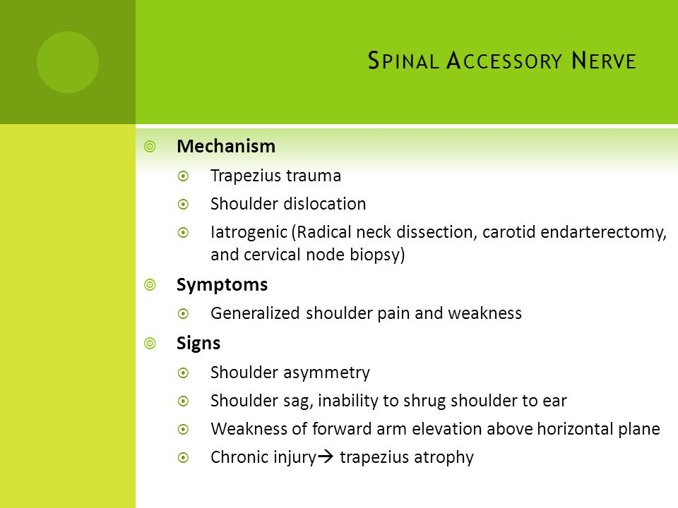 Spinal Accessory Nerve