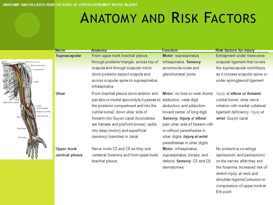 Anatomy and Risk Factors