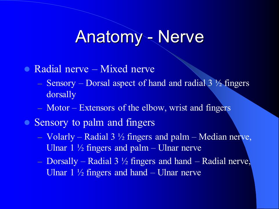 Anatomy - Nerve Radial nerve – Mixed nerve Sensory to palm and fingers