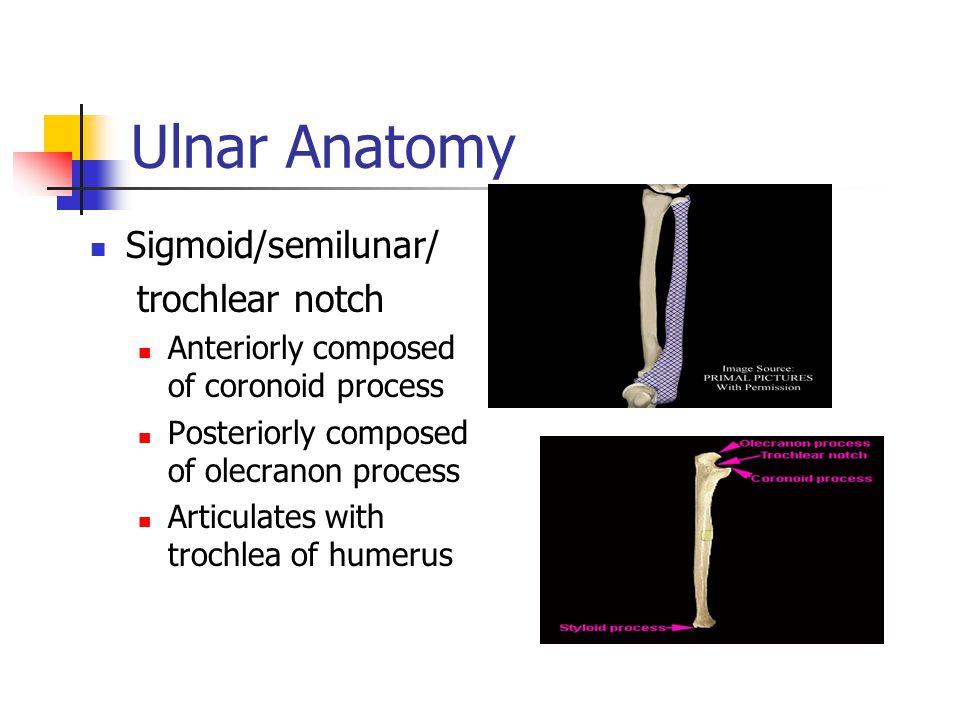 Ulnar Anatomy Sigmoid/semilunar/ trochlear notch