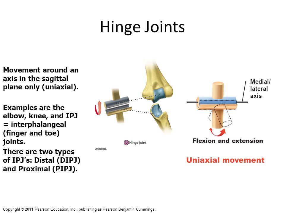 Hinge Joints Uniaxial movement
