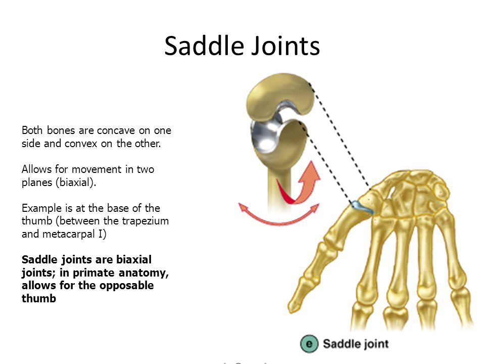 Saddle Joints Both bones are concave on one side and convex on the other. Allows for movement in two planes (biaxial).