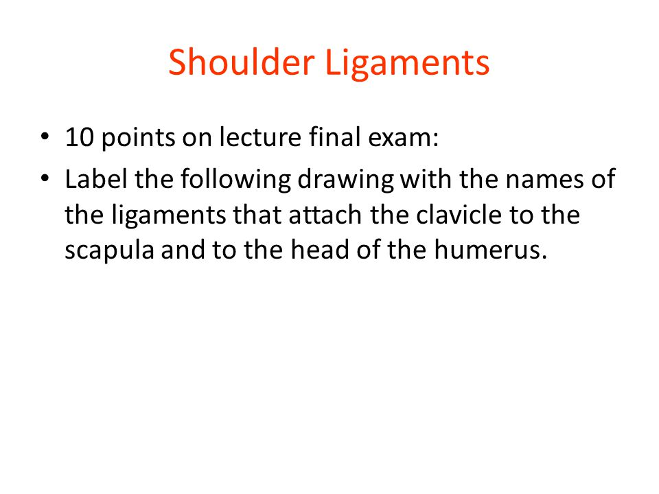 Shoulder Ligaments 10 points on lecture final exam: