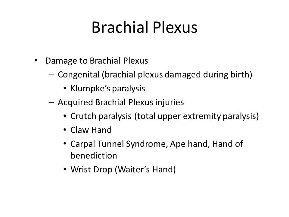 Brachial Plexus Damage to Brachial Plexus