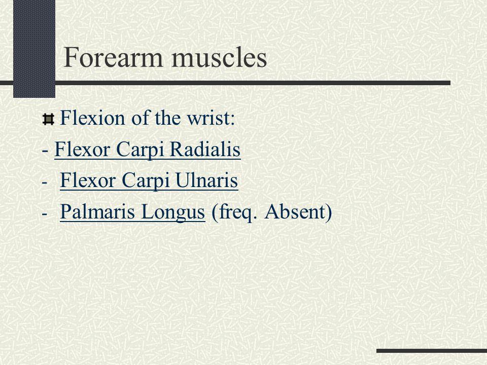 Forearm muscles Flexion of the wrist: - Flexor Carpi Radialis