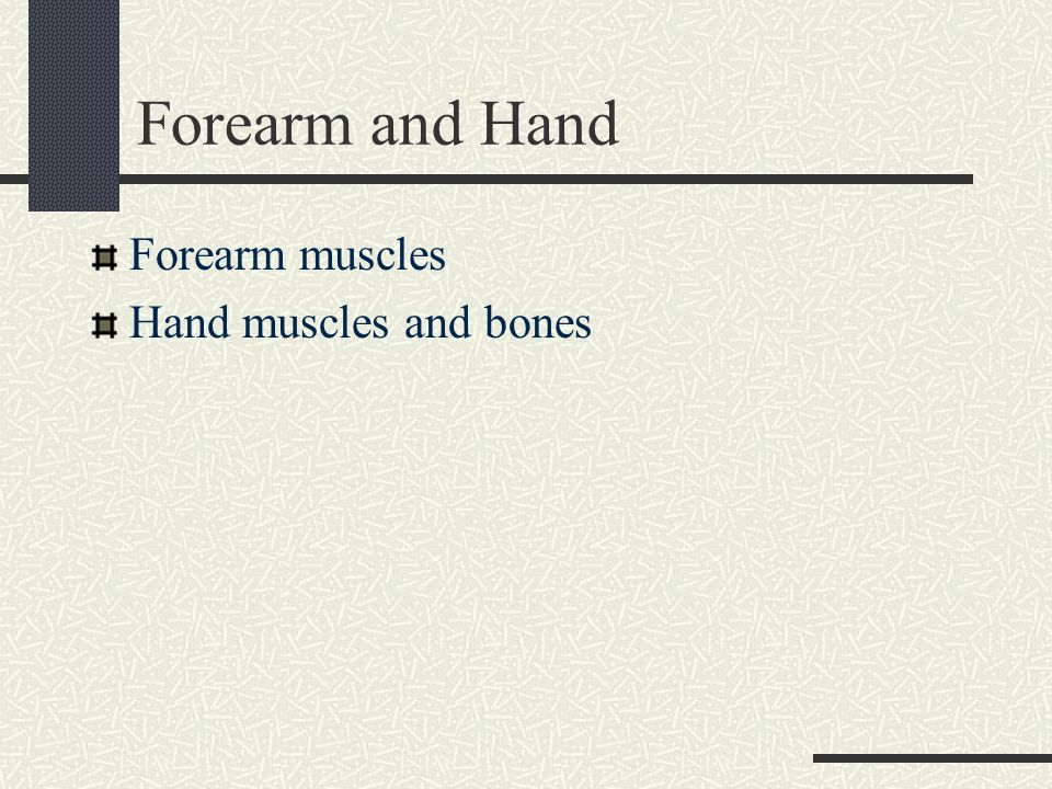 Forearm and Hand Forearm muscles Hand muscles and bones