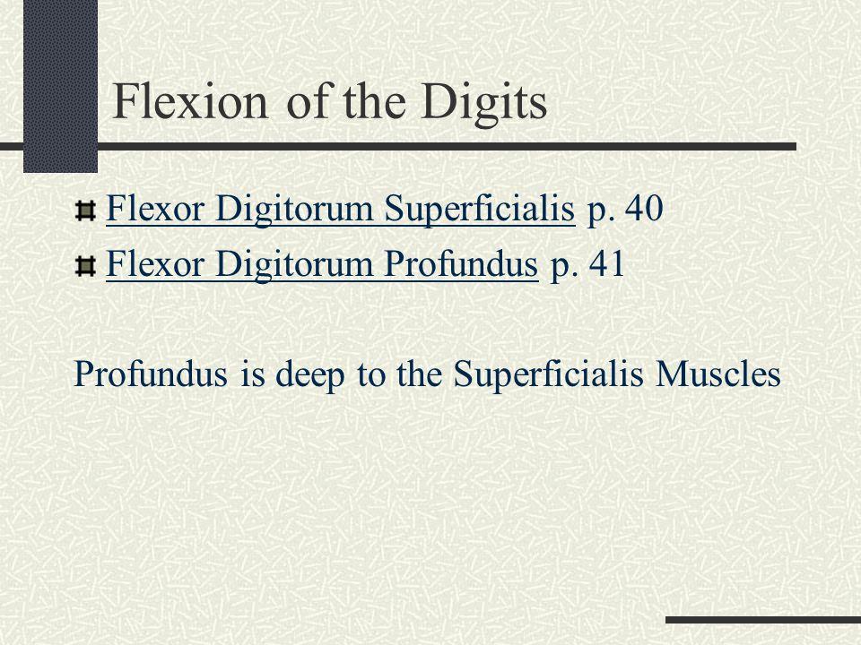 Flexion of the Digits Flexor Digitorum Superficialis p. 40