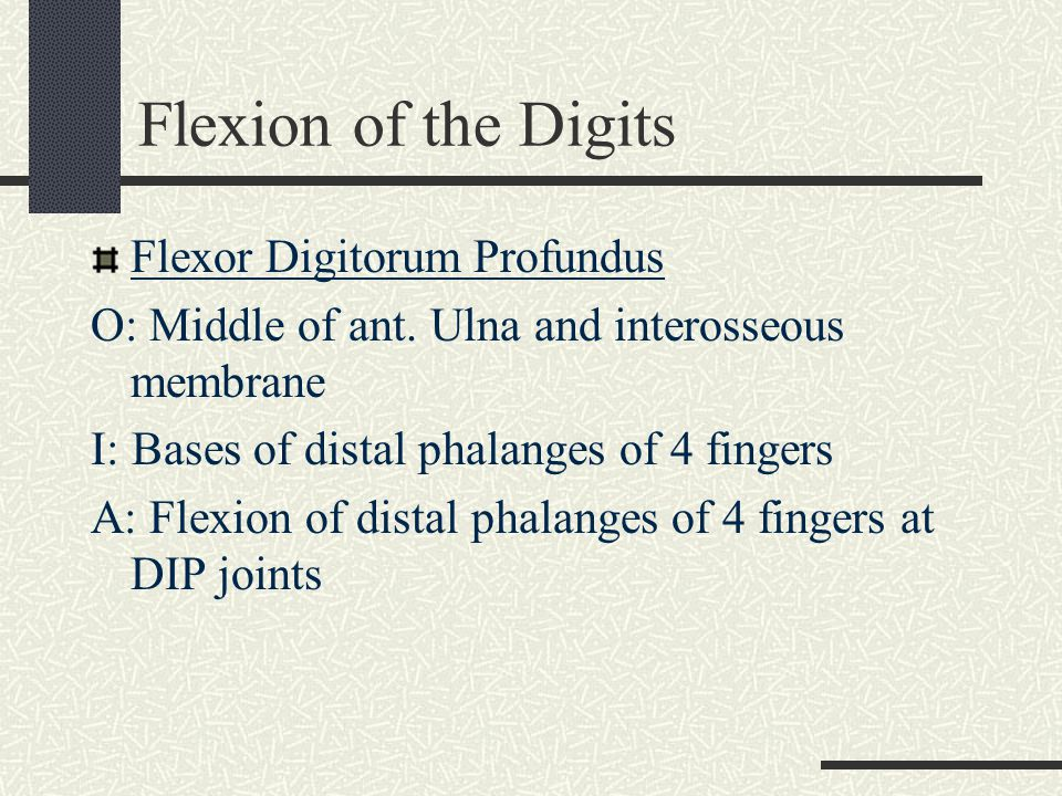 Flexion of the Digits Flexor Digitorum Profundus