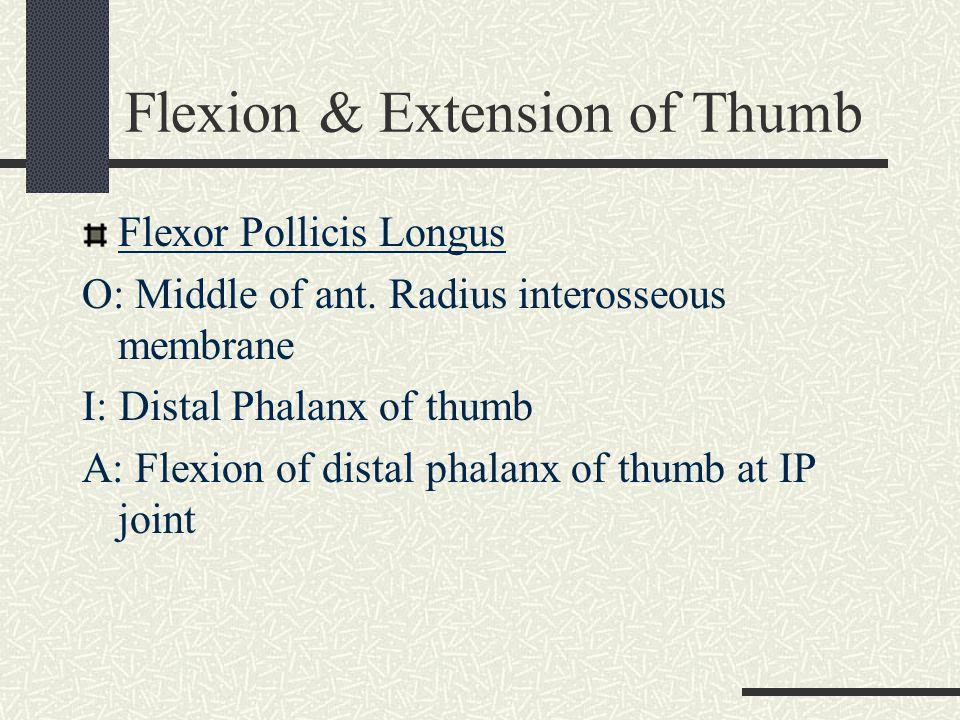 Flexion & Extension of Thumb